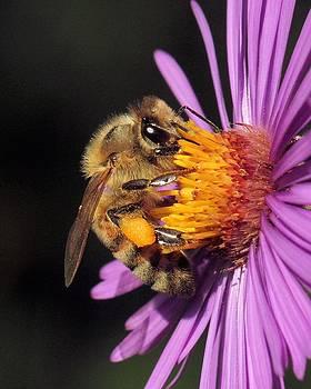 Pollen Laden Bee by Doris Potter