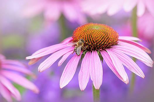 Pollination by Jacky Parker