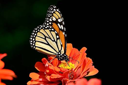 Pollination by Terri Waselchuk