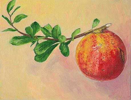 Pomegranate Fruit by Dai Wynn
