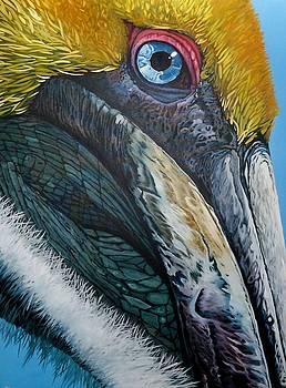 Pompous Pelican by Jon Ferrentino