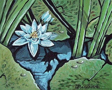 Pond Lily by Denise Armstrong
