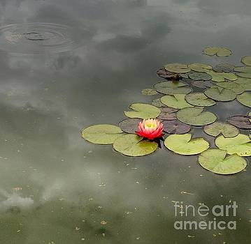 Pond Reflections and Water Lily by Anita Adams