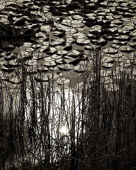 Pond's Edge by Colleen Williams