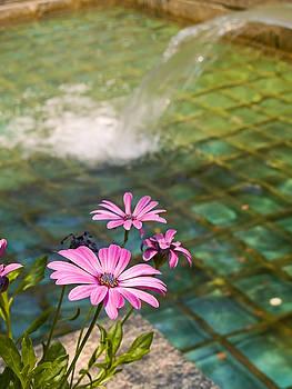 Pool and Flowers by Andrew Kazmierski