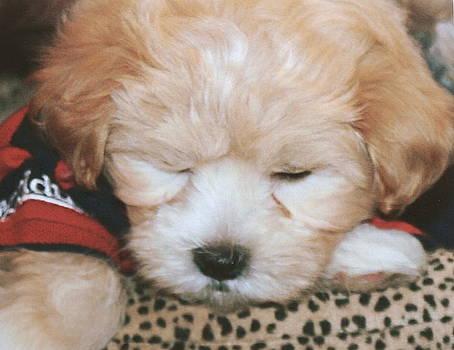 Diane Merkle - Pooped Pup