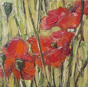 Poppies in grass by Nancy Van den Boom