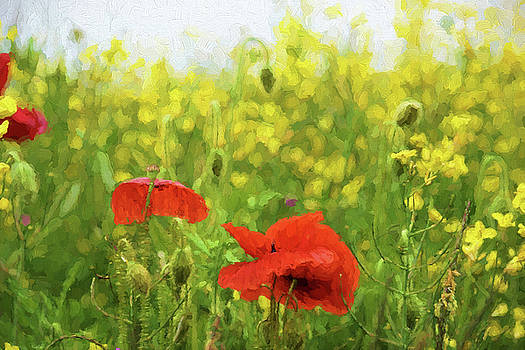 Poppies in Rape by Ron Harpham
