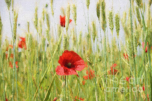 Poppies in the Fields. by ShabbyChic fine art Photography