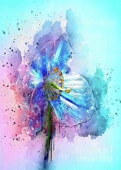 Svetlana Sewell - Poppy Art
