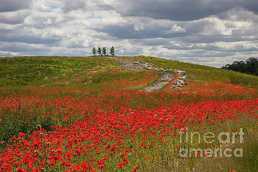Poppy Field 2 by Timothy Johnson