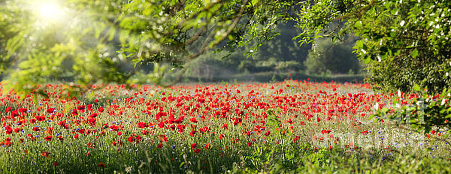 Poppy field panorama in spring by Simon Bratt Photography LRPS