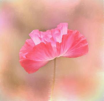 Kim Hojnacki - Poppy Flower - Tickle Me Pink