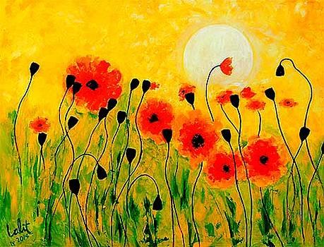 Poppy flowers by Lalit Jain