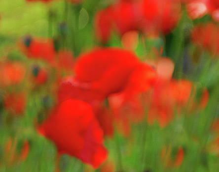 Poppy Scape by Andrea Kollo