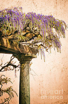 Porch with wisteria by Silvia Ganora