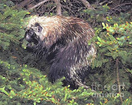 Porcupine in a Fir tree by Elaine Manley