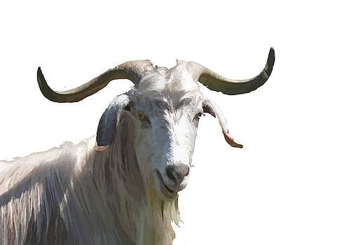 Tracey Harrington-Simpson - Portrait of a Horned Goat Grazing Vector