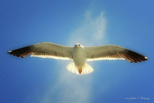 Portrait of a Seagull by John A Rodriguez