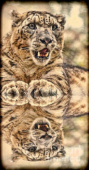 Portrait of a Snow Leopard with a Reflection II by Jim Fitzpatrick