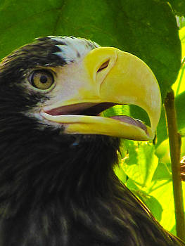 Portrait of an Eagle by Hunter Productions