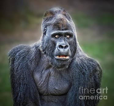 Portrait of King Kongs Cousin by Jim Fitzpatrick