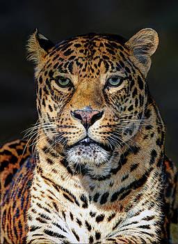 Portrait of Leopard by Savannah Gibbs
