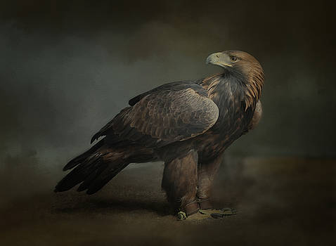 Portrait of Orla the Golden eagle by Sue Fulton