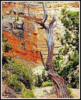 Portrait of the Past, Geological Time and Dead Pine Tree by A Gurmankin