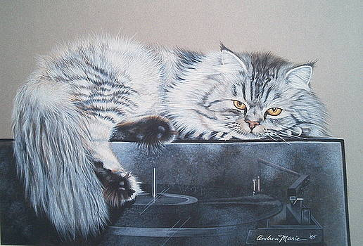 Portrait Silver Tabby Persian by Andrea Ellwood