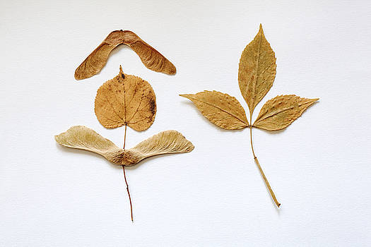 Posing Leaves by Bernice Williams