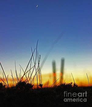Prairie crescent by Wesley Hahn