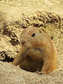Prairie Dog Peek by Robin Regan