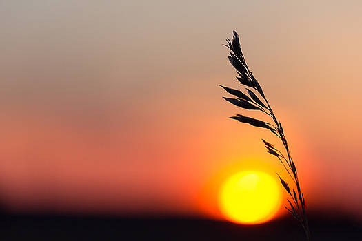 Prairie Sunset by Penny Meyers