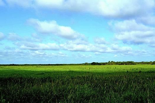 Prairie View by Tammy  Shiver