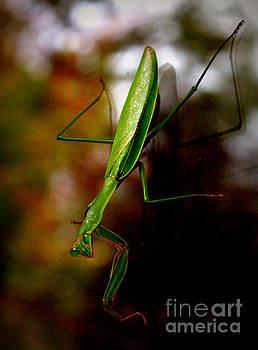 Praying Mantis by Beth Ferris Sale