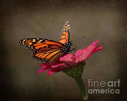 Prefect Landing - Monarch Butterfly by Judy Palkimas