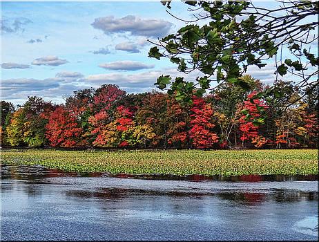 Pretty Autumn Scene by Mikki Cucuzzo