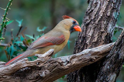 Pretty Bird by Bob Marquis