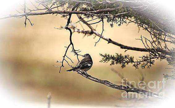 Pretty Bird by Douglas Barnard
