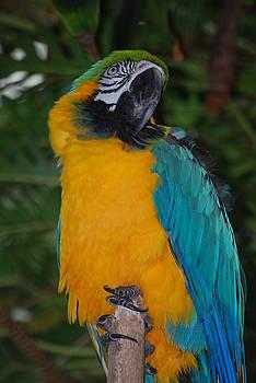 Pretty Bird by Ramona Whiteaker