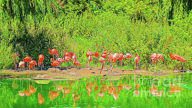 Pretty Flamingos by Chris Thaxter