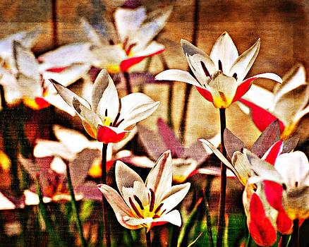 Marty Koch - Pretty Flowers