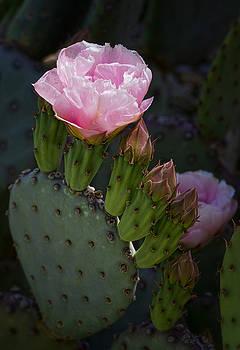 Saija  Lehtonen - Pretty in Pink Prickly Pear