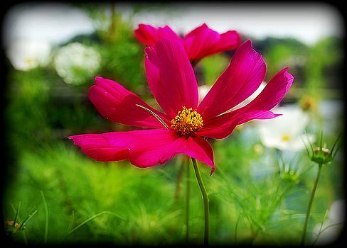 Pretty In Pink by Sarah Hamlin