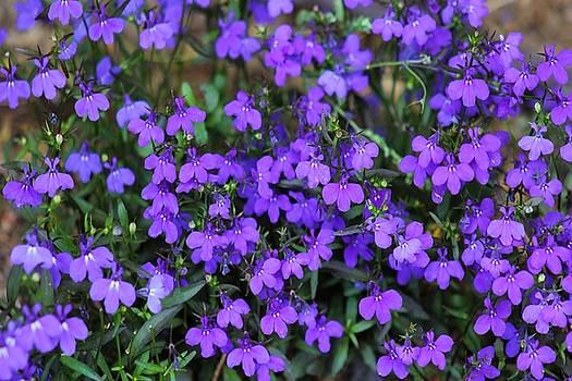 Pretty in purple by Tammy Espino