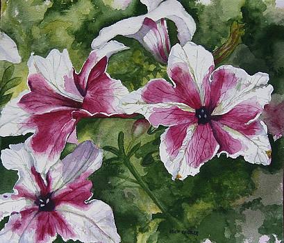 Pretty Petunias by Helen Shideler