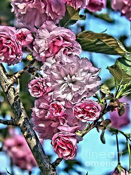 Pretty Pink Blossoms by Christy Ricafrente