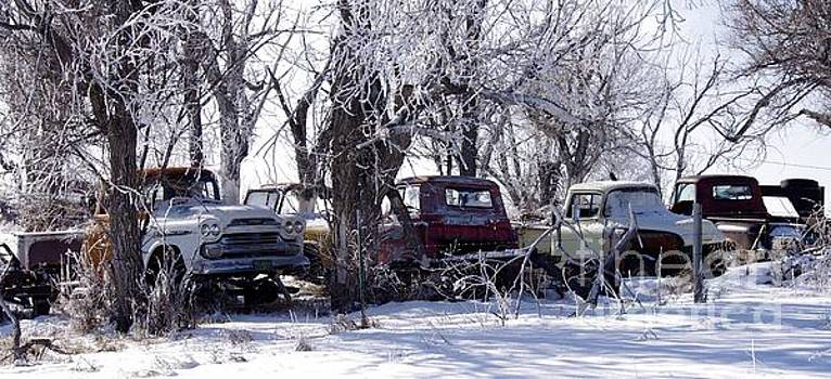 Pretty Trucks In A Row by Deniece Platt