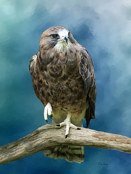 Prey bird by Johanne Dauphinais